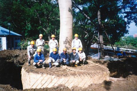 巨木の根巻 株式会社 港南植木ガーデン@横浜